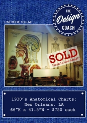 anatom posters web SOLD